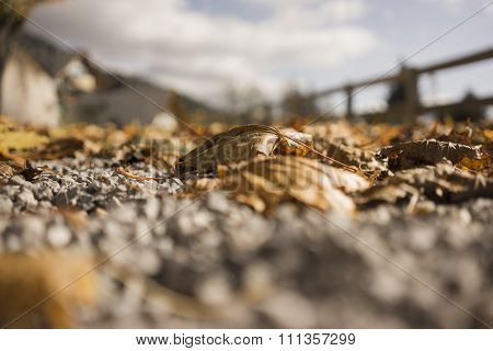 Fallen Autumn Leaf On Gravel Road Near Fence
