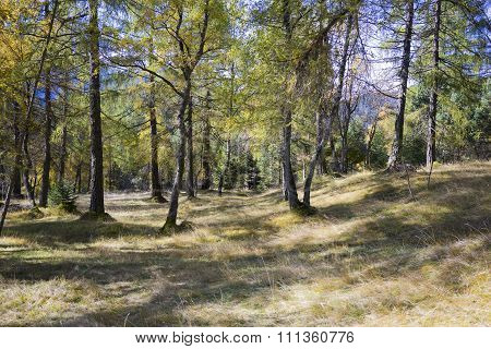 Shadowed Clearing In Alpine Evergreen Forest