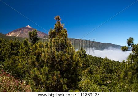 View On The Peak Of Mount Teide