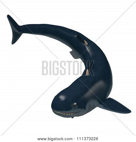 Devonian Cladoselache Shark
