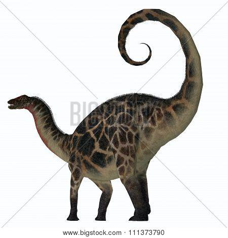 Dicraeosaurus Dinosaur Tail