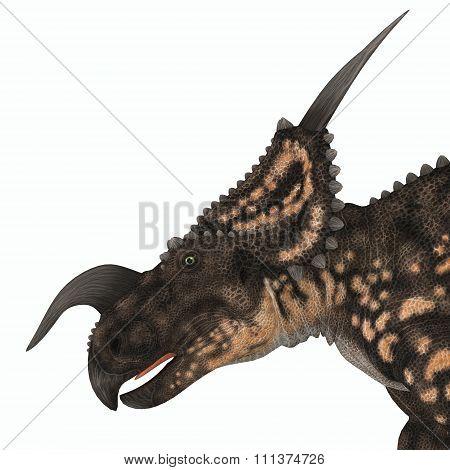 Einiosaurus Dinosaur Head