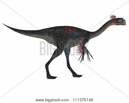 Gigantoraptor On White