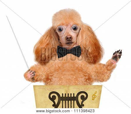 Dog conductor.