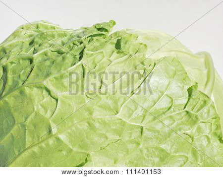 Green Cabbage Vegetables