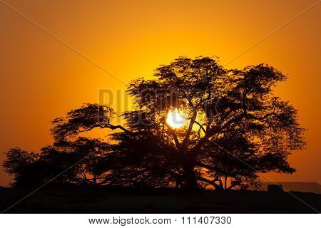 Tree Of Life At Sunset, Bahrain