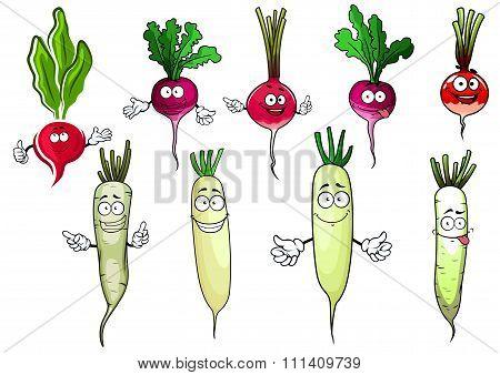 Red radish and white daikon vegetables