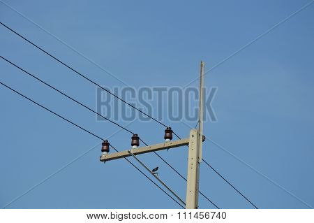 oriental magpie robin on electricity post