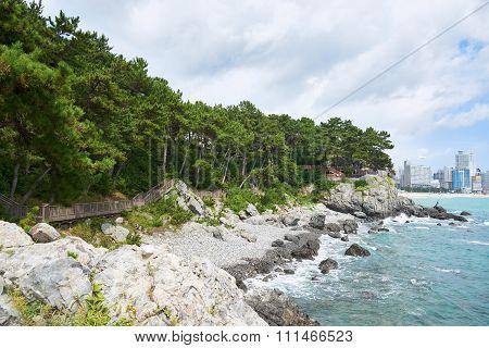 Pathway Along The Coast Of Dongbaek Island.