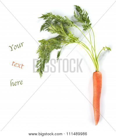 Young Carrots With Tops Of Vegetable On White Background With Text Place.