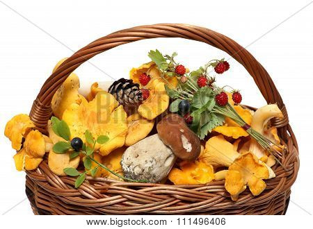 basket of forest mushrooms and berries isolated on white background.