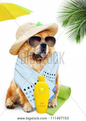 Dog. Holidays at sea.