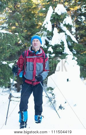 Hiker In The Coniferous Forest