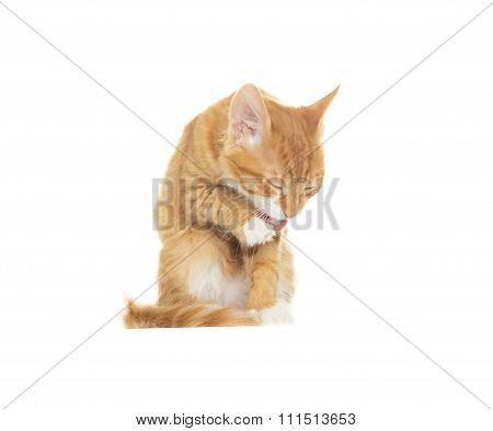 Funny Cat Licks A Paw On A White Background