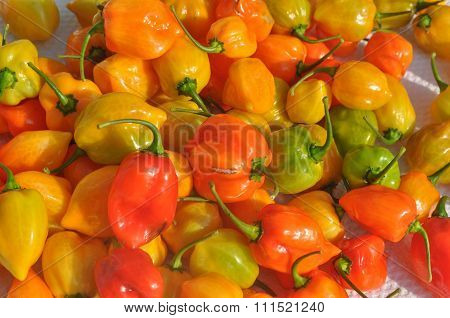 Red Peppers Vegetables