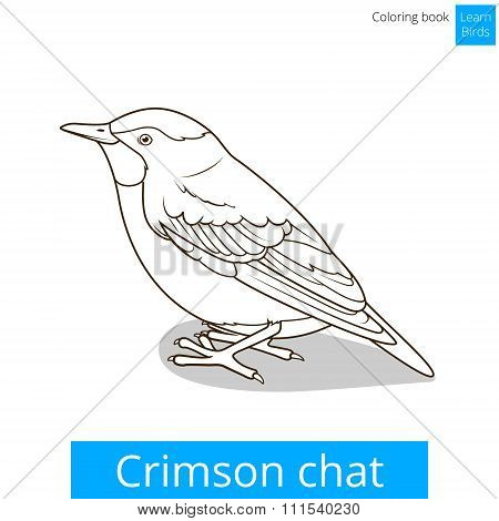 Crimson chat bird coloring book vector