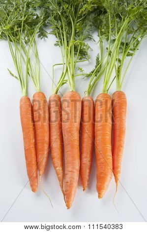 Young Carrots With Tops Of Vegetable On A Light Background..