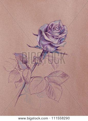 Purple Rose Drawing