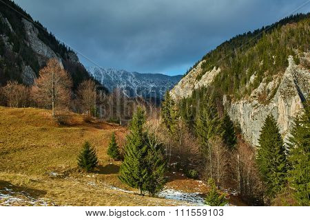 Mountain Pine Forests