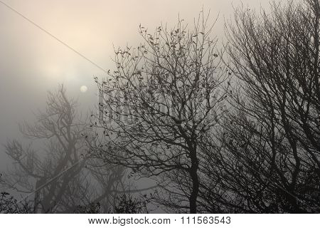 misty nature