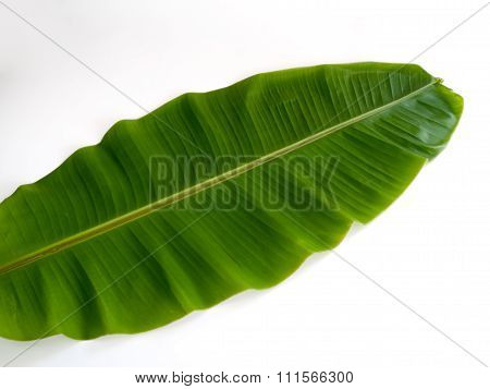 Banana Leaf ,the Leaves Of The Banana Tree.
