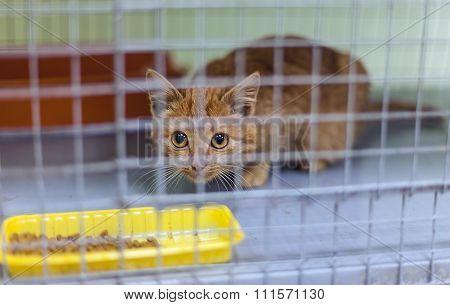 Stray kitten in a shelter