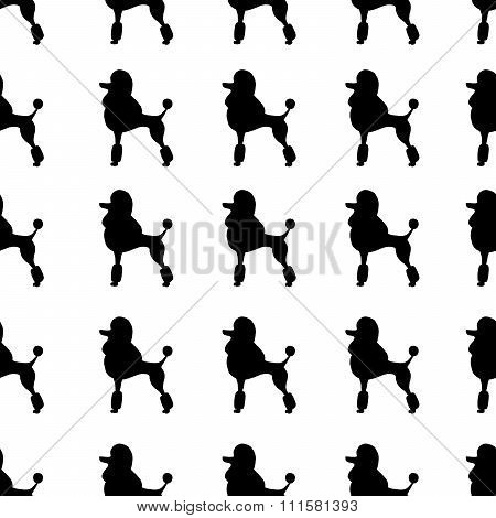 Black poodles on white background. Seamless pattern