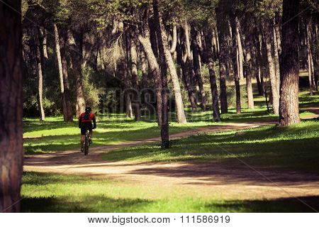 Cyclist Riding Between The Pines.