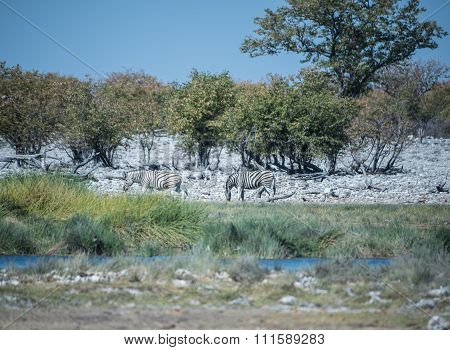 Waterhole in the savannah of Etosha National Park