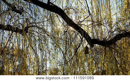 Birdhouse With A Cone-shaped Roof In Back Light In A Yellow Weeping Willow
