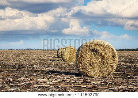 Several Rolls Of Hay On The Field