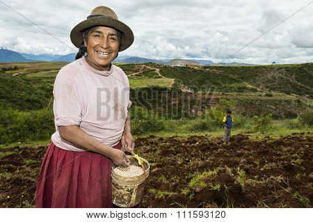 Peruvian woman sowing a field near Maras in Peru