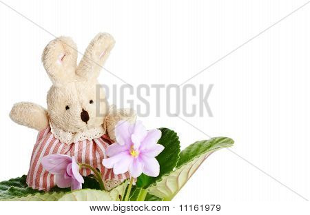 Toy Little Doe Rabbit With Violet Flowers Izolated On White