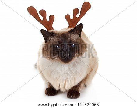 Funny Christmas Reindeer Pet Cat