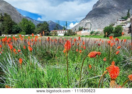 Colorful Flowers And Hacienda