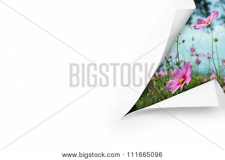 A cut blank page with a meadow, flowers and blue sky behind
