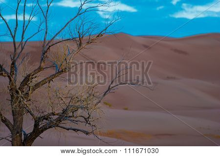 Single Tree Against The Sand Dunes