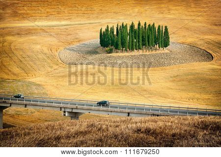 Grove of cypress in the Italian Tuscany.