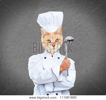 Ginger cat chef over gray wall background.