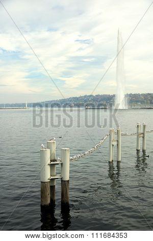 Seagulls on line on Leman lake in Geneva, Switzerland