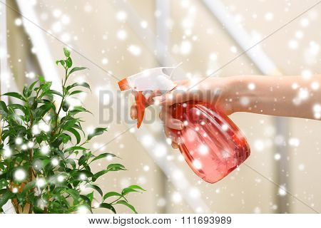 Male hand spraying flowers on light blurred background over snow effect