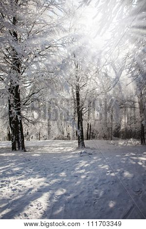 The forest glade which is filled up with snow. Solar winter Christmas morning