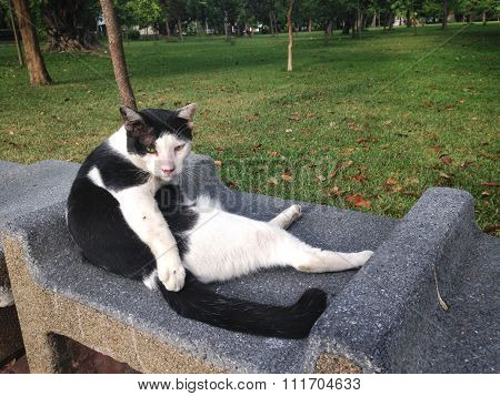 The Black And White Stray Cat Is Sitting On A Park, Thailand