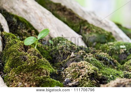 Sapling In The Green Moss