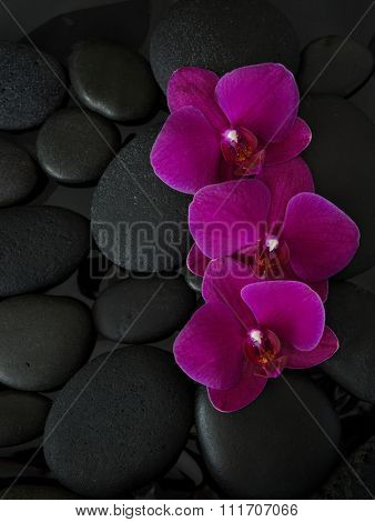 Three orchids lying on black stones. Viewed from above. Spa concept.  LaStone Therapy