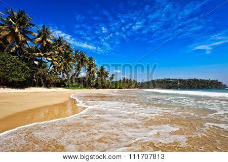 Tropical paradise idyllic beach. Sri Lanka