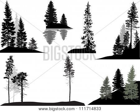 illustration with trees set isolated on white background