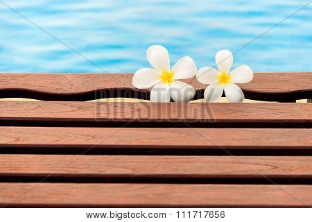 Plumeria Flower In The Swimming Pool