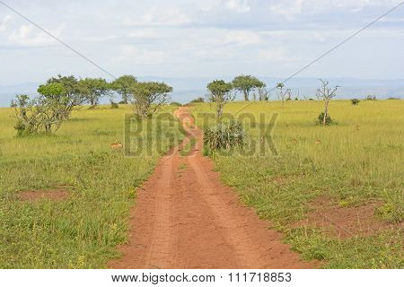 Rural Road In The African Veldt