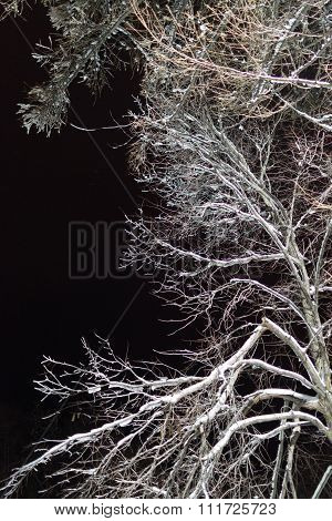 Winter Tree In Snow At Night